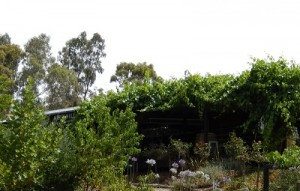 Kirrihill-Wine-Clare-Valley-South-Australia